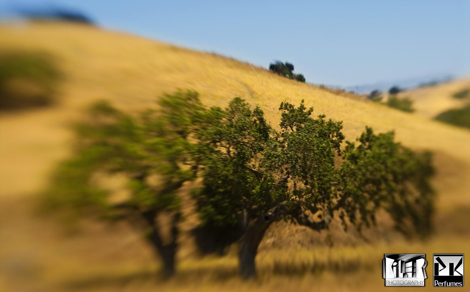 California Hills 1 - PK Perfumes