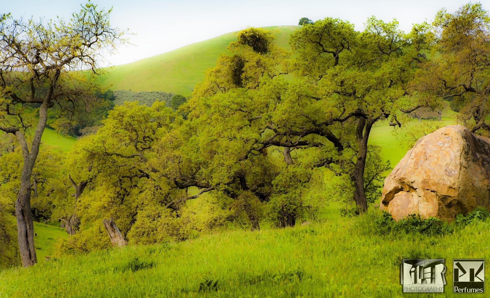 California Hills 2 - PK Perfumes