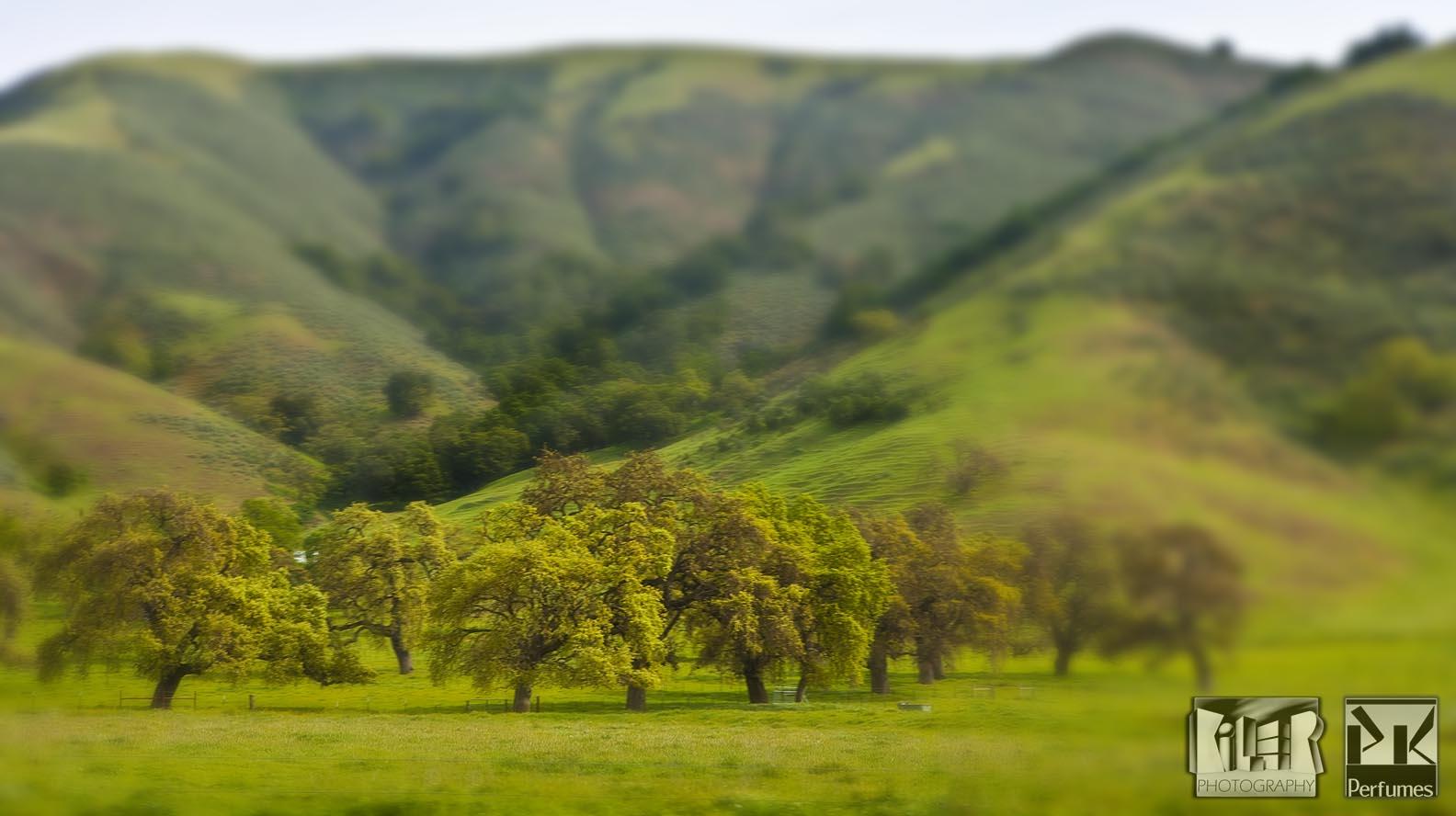 California Hills 5 - PK Perfumes