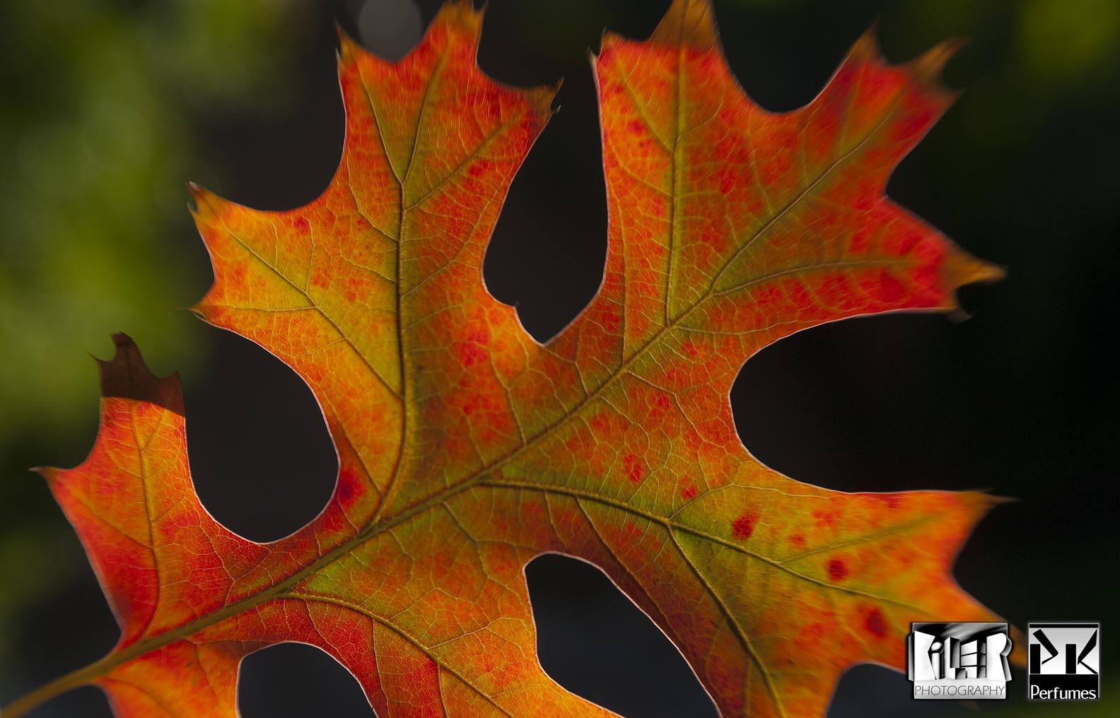 Fall Leaf 1 - PK Perfumes