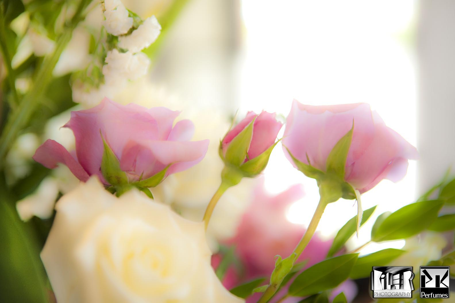 Wedding Bell Roses